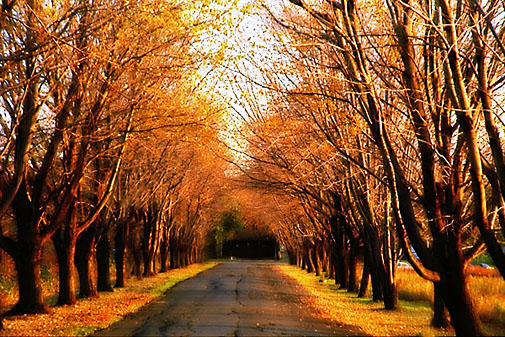 Chemin d'automne a Montreal.jpg